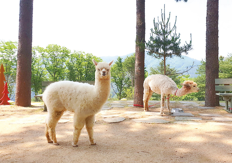 e6b075fb-940-Alpaca-World